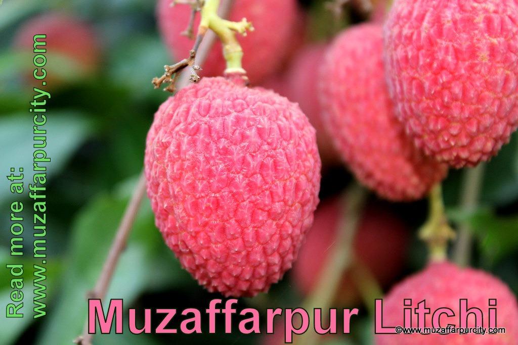 Muzaffarpur Litchi